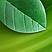 <br>Klient Noesis Foods Ltd. Sojatoodete etiketid ja kaubamärk VegeSun. Aastal 2012.
