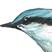 <br>Ajakirjale Loodussõber illustratsoioon lindudest.